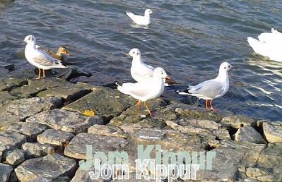 Schabbat Schuwa und Jom Kippur Kommentar