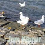 rp_Jom-Kippur-Tahara-Reinheit-150x150.jpg